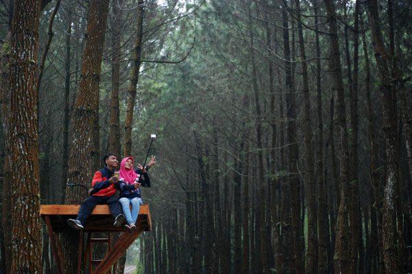 Wisata Pinus Kranggilan
