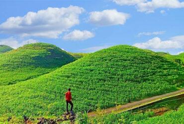 Gunung Bagus : Spot ala Bukit Teletubbies di Gunung Kidul