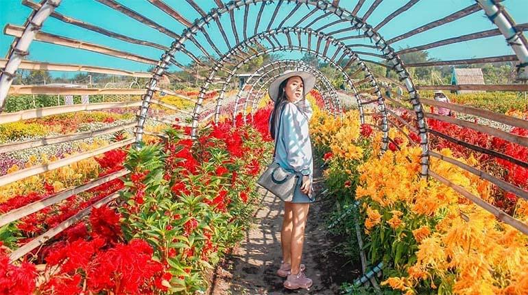 Romantic Garden : Spot Taman Bunga Instagramable di Bantul